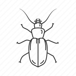 beetle, bug, coleoptera, common beetle, insect, pest icon