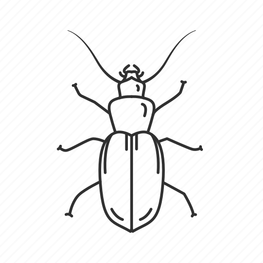 Beetle, insect, bug, coleoptera, common beetle, pest icon - Download on Iconfinder