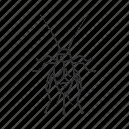 bug, bush cricket, cricket, grasshopper, gryllidae, insect icon