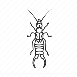 bug, dermaptera, earwig, insect, pest, pincers, pinchers icon