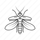 bug, fire fly, firefly, flying insect, insect, lampyridae, lightning bugs icon