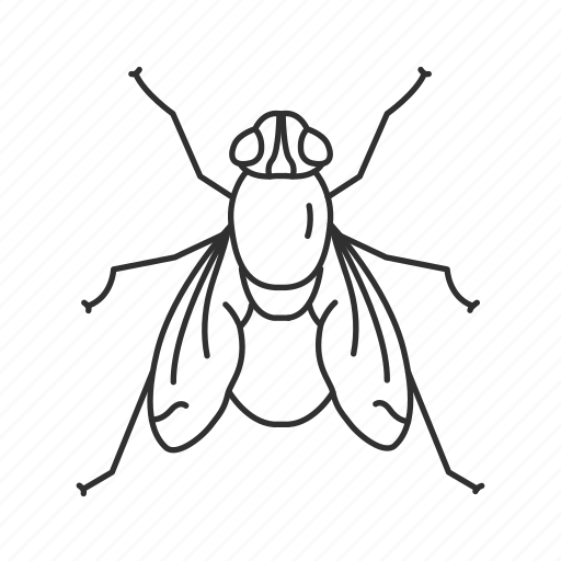 black fly, common fly, fly, flying insect, horse fly, house fly, insect icon