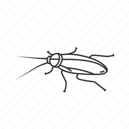 beetle, bug, cockroach, insect, pest, roach icon