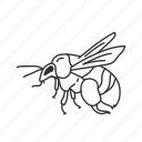 bee, flying insect, insect, yellow jacket icon