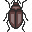 beetle, scarab, scarabaeus icon