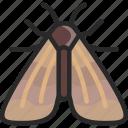 corn borer, gypsy, moth icon