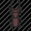 beetle, ookuwagata, stag beetle icon