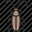 blatta, cockroach, cucaracha icon