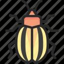 beetle, bug, colorado, potato icon