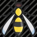 hornet, wasp, yellow jacket icon