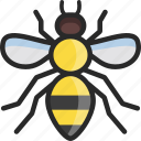 bee, honeybee, stingless, honey icon