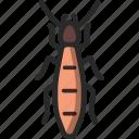 ant, pheidole, termite, white icon