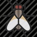 fly, tsetse, housefly