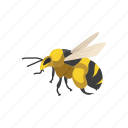 animal, invertebrates, bee, beeswax, wasp, flying insect, insect