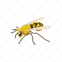 animal, bee, beeswax, flying insect, insect, invertebrates, wasp icon