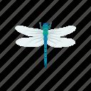 animal, damselfly, dragon fly, emerald damselfly, insect, nymph