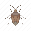 animal, beetle, bug, insect, shield bug, stink bug