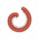 animal, insect, millipede, parasite, pest, snake millipede icon
