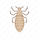 animal, blood-feeding insects, body lice, head lice, insects, parasite