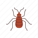 animal, bed bug, blood-feeding, bug, insects, parasite, pet icon