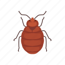 animal, bed bug, blood-feeding, bug, insects, parasite, pet