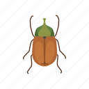animal, beetle, bug, flower chafer, insect, pest, scarab