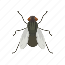 animal, bloodsucker, housefly, insect, invertebrates, pest