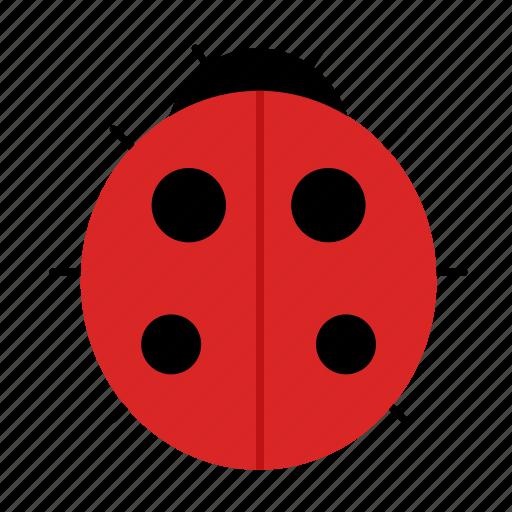 fly, insect, ladybug icon