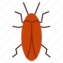 bug, cockroach, insect, pest icon