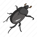 animal, arthropod, beetle, bug, insect icon