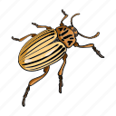 arthropod, beetle, bug, colorado, insect, nature icon
