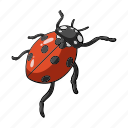 arthropod, beetle, bug, fly, insect, ladybug icon
