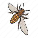 apis, arthropod, bee, honeybee, insect icon