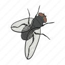 arthropod, fly, insect, winged icon