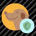 dog, insurance, pet, shield