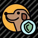 dog, insurance, pet, shield icon