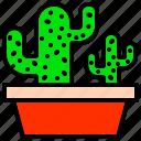 cacti, cacto, cactus, plant, spines