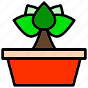 flower, grass, herb, plant, seedling