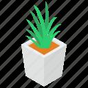 aloe vera plant, houseplant, natural plant, organic plant, plantation, pot plant icon