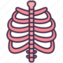body, bones, human, internal, organ, skeletal, skeleton