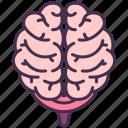 brain, control, human, internal, nervous, organ, system