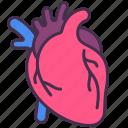 anatomy, blood, body, heart, human, internal, organ