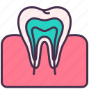 chewing, gum, human, internal, organ, teeth, tooth icon