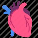 anatomy, blood, body, heart, human, internal, organ icon