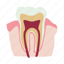 anatomy, bone, internal, man, organ, root, tooth icon