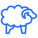 sheep, islam, islamic, animal, muslim, religion, wool