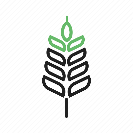 Food, harvest, healthy, natural, plant, summer, wheat icon - Download on Iconfinder