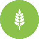 food, harvest, healthy, natural, plant, summer, wheat