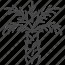 dates, israel, israeli, palm, travel, tree icon