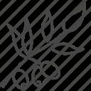 israel, israeli, olive, plant, tree icon